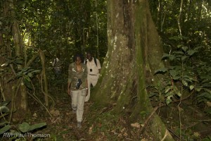 The forest of Lomako - searching for bonobos.