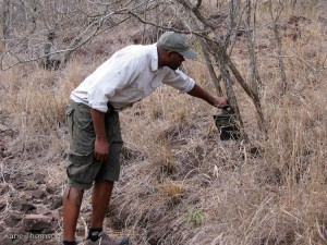 Checking the camera trap for leopard photos... without luck this time.