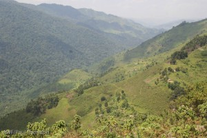Where people and gorillas meet: the Nkuringo community borders Bwindi Impenetrable National Park.