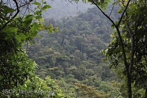 The forest of Bwindi Impenetrable National Park, Uganda.