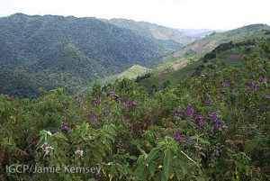 The Nkuringo community sits on the border of Bwindi Impenetrable National Park.