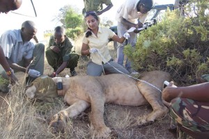 Shivani Bhalla, coordinating the lion collaring.