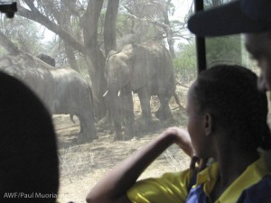 Students watching elephant: for most of the students, this was their first encounter with elephants. This surprised me because I know the students come from areas inhabited by elephants.