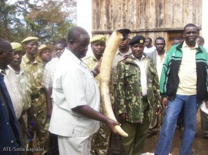 MP from the Ministry of Environment holds one of the massive tusks.
