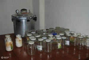 Jars and equipment used for mushroom cultures