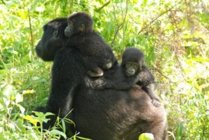 Kwitonda emerges with brother and sister twins Karunge and Muhozi.
